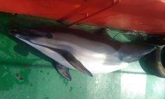 თურქული გემი დელფინის მოკვლისთვის დაჯარიმდა